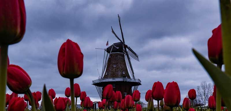 Heerlijk Hollands thema